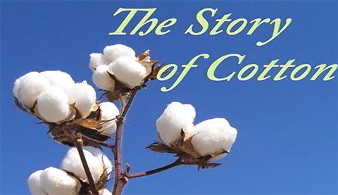 Cotton' story